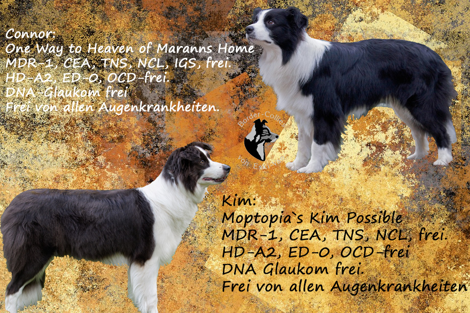 Kim-u.-Connor-fertig